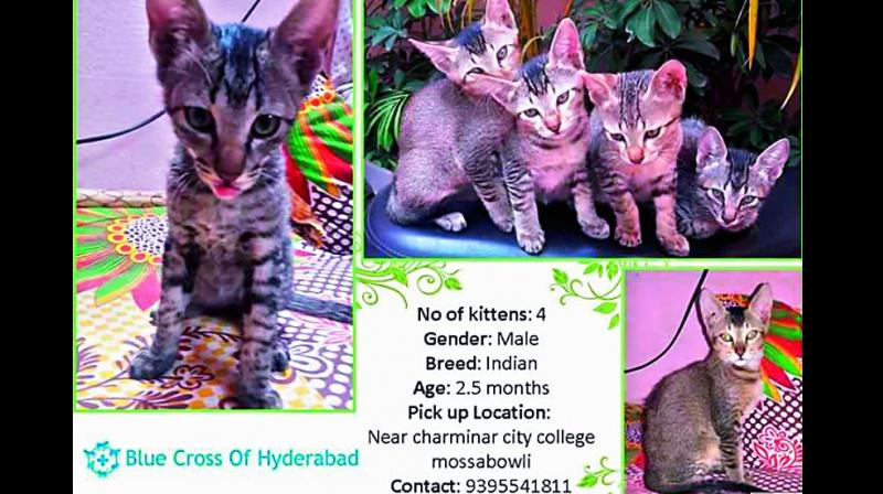 Hyderabad: Tribals stealing cats, selling off skins