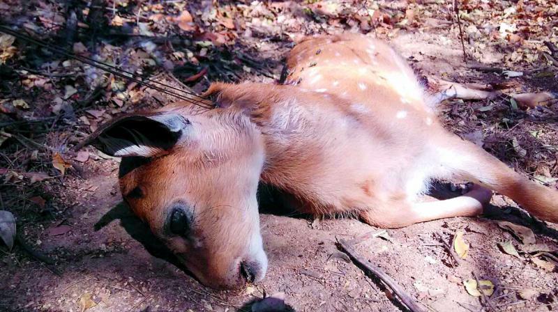 Poachers trap, kill deer at University of Hyderabad
