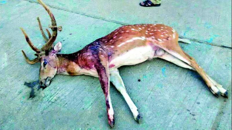 Telangana: Hit-and-runs leave six deer dead in 5 months