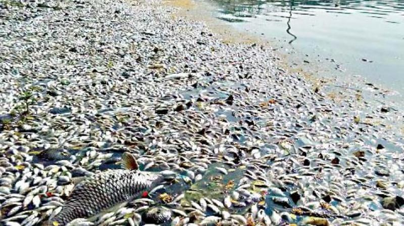 One Million Fish Have Died In The Darling River, Here's ...