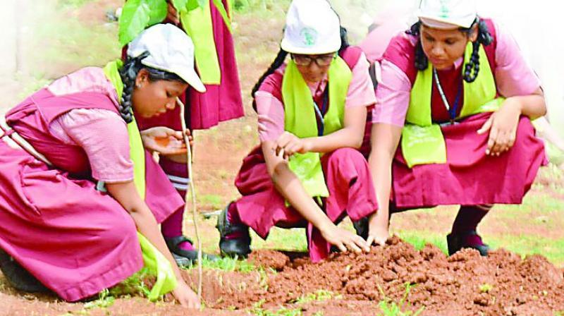 Telangana: 20 extra marks, if kids adopted saplings live