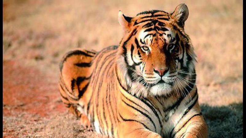 Compensate leopard attack victim: Consumer Forum