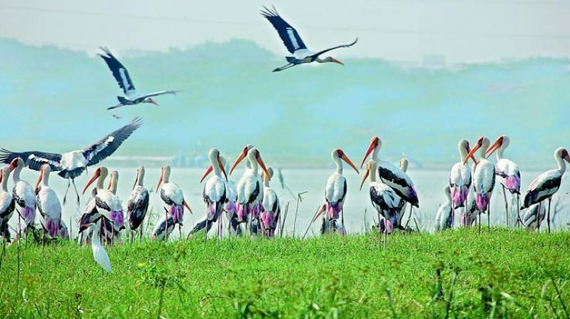 New bird sanctuary near Gandipet Lake