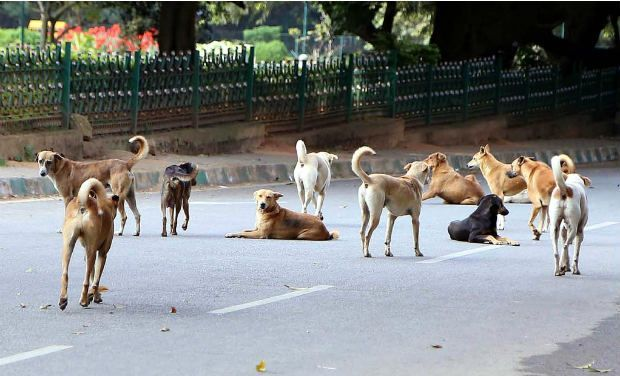 Hyderabad: 4 civic staff suspended for poisoning 78 stray dogs